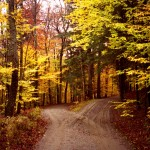 """""""Two roads diverged in a yellow wood.."""""""