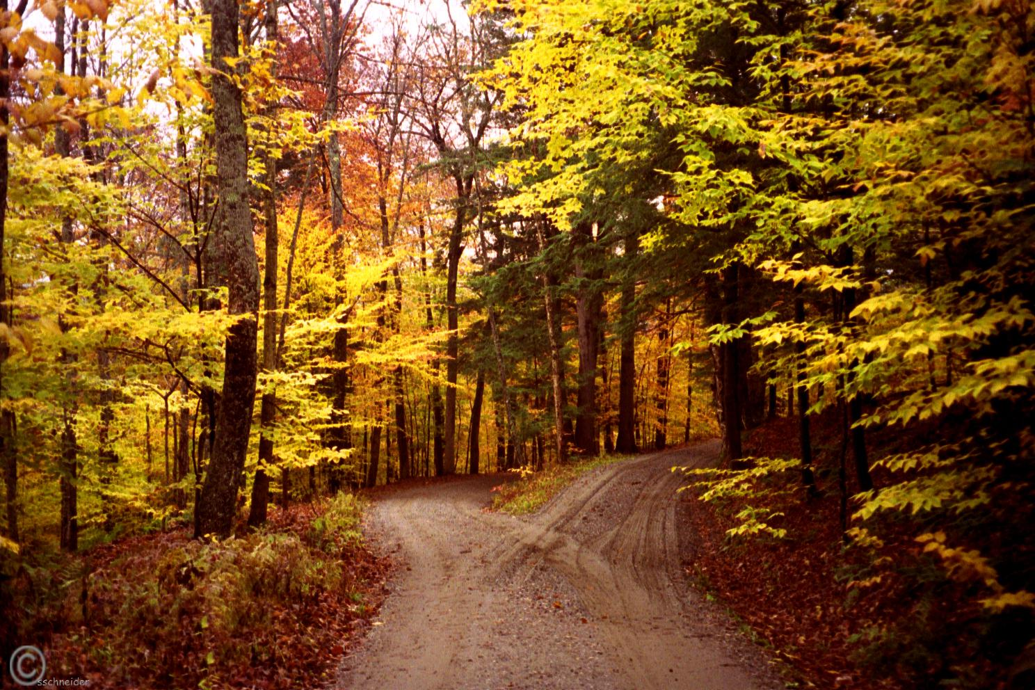 Jc poetry historyvault two roads diverged in a yellow wood sciox Choice Image